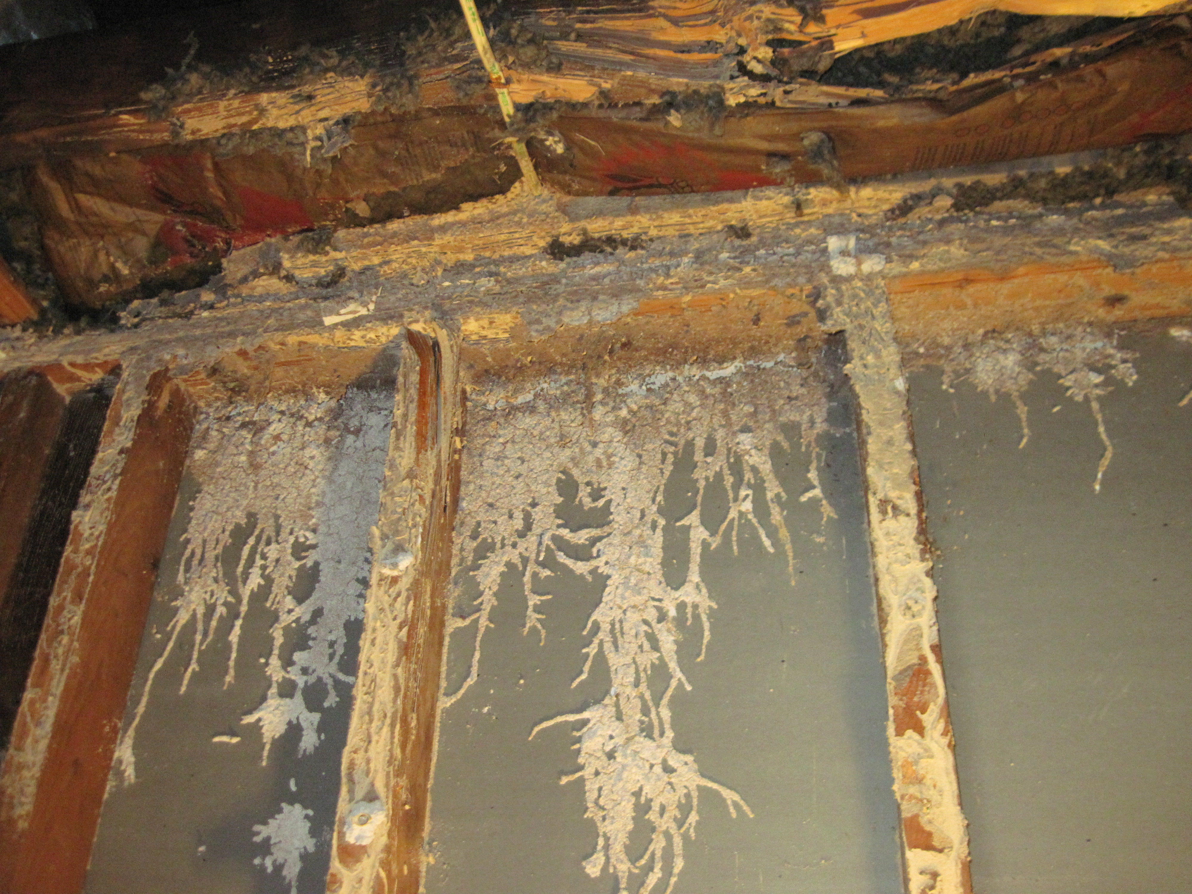 Termite Prevention J E Brennan Corp All Phases Of